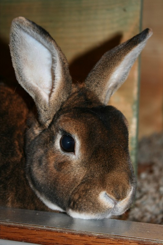 Buster - Westmoreland Sanctuary - Bunny